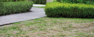 Revive your lawn after the drought